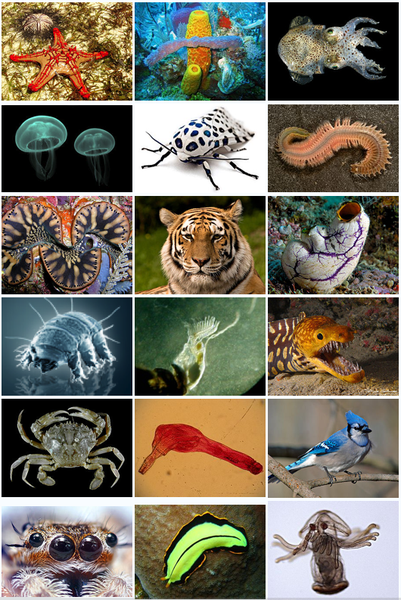 ethology and animals Introduction the ethology, the study of animal behavior ethology  animal behaviour (simplified quick hindi) - продолжительность: 3:58 the quantum bhaarat 6 689 просмотров.