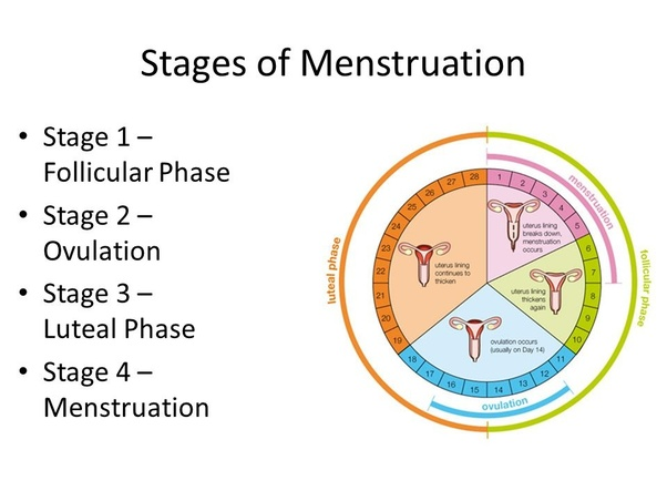 Can unprotected sex change your menstrual cycle