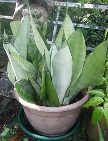 What Are The Best Unkillable Indoor Plants Quora