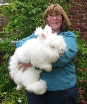 Woman holding a gigantic white rabbit, which pretty much covers her torso. The rabbit's head appears to be larger than the woman's, though this is because of the amount of fur on it.