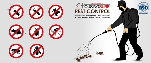 How to get rid of the thousands of small red ants that have taken ...