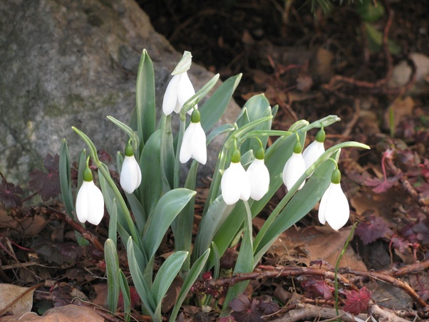 Of All The Spring Flowering Bulbs What Is Your Favorite Quora
