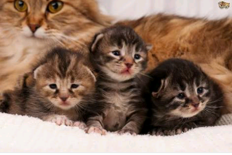 Mother Cats Leave Their Kittens