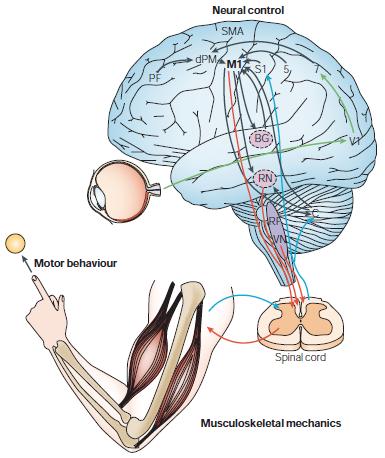 how human memory works pdf
