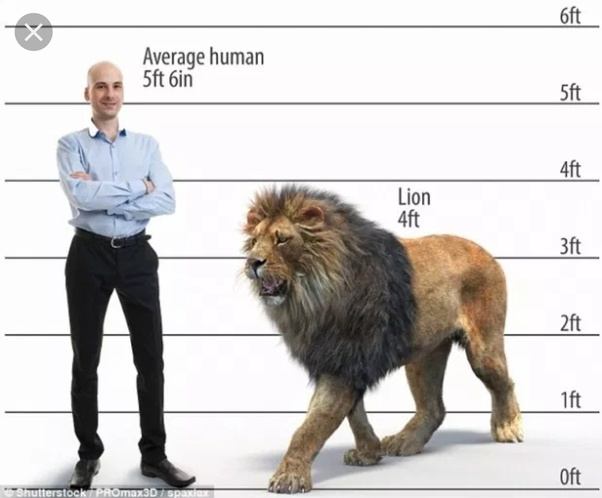 Midget size human beings