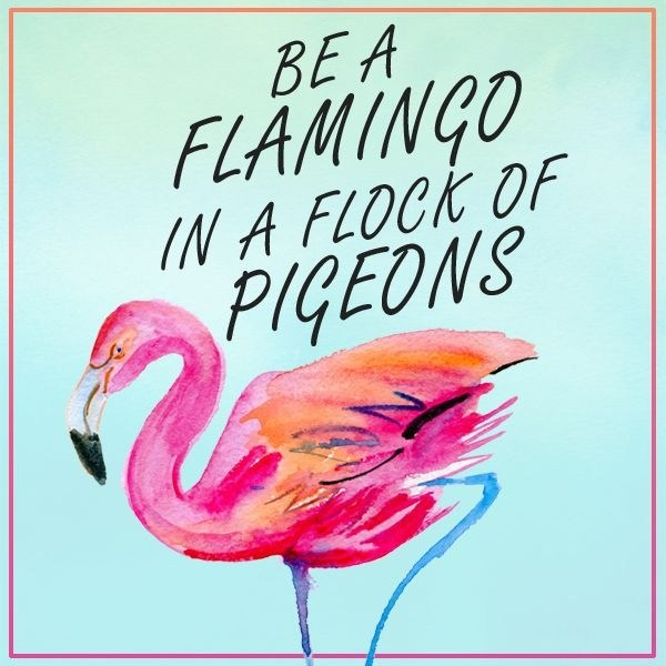 What Does It Mean By Be A Flamingo In A Flock Of Pigeons Quora