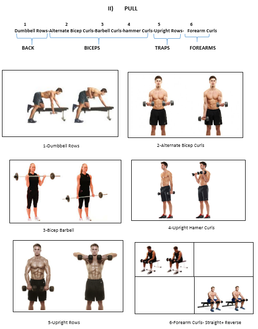 Dumbbell Rows Alternate Bicep Curls Barbell Hammer Upright Forearm