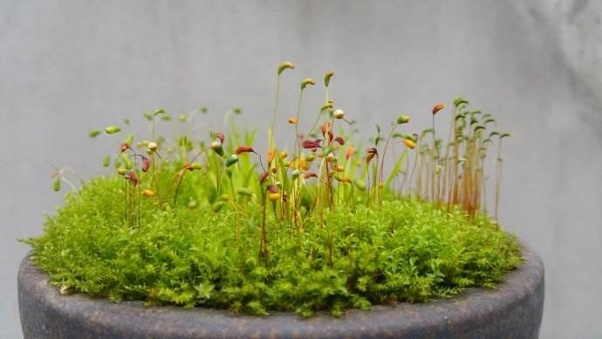 What Are The Best Conditions To Grow Moss Quora