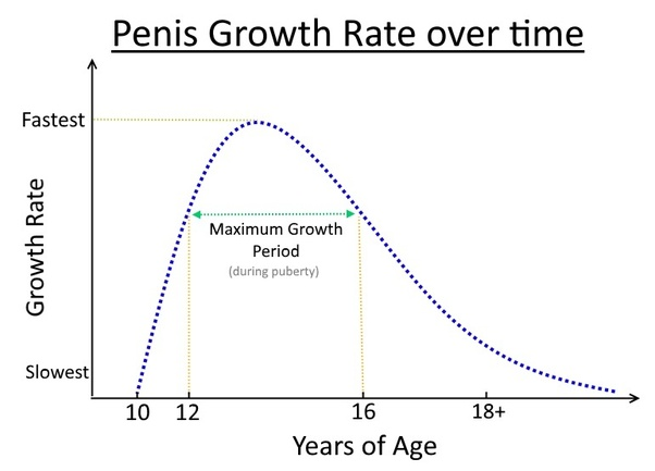 my How grow does penis