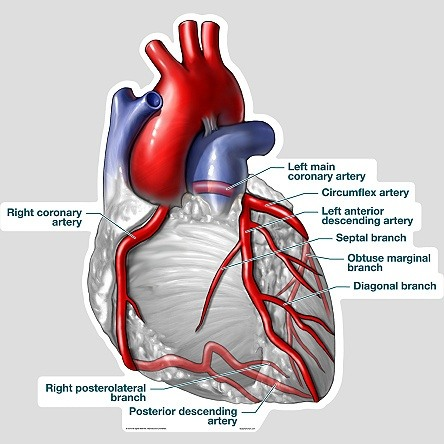 Coronary artery blocking: how does the blockage of 90% ...
