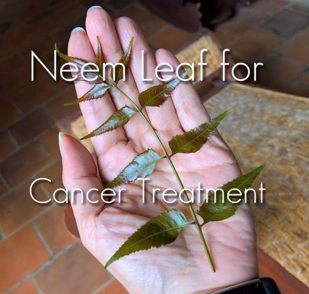 What is the benefit of eating neem leaves? - Quora