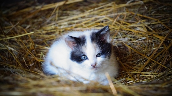 We Found Kittens That Are About 3 Weeks Old And Infested With Fleas What S A Safe Effective Flea Powder I Can Buy From The Store Today Quora