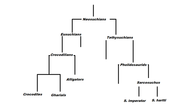 Was A Sarcosuchus An Alligator A Crocodile Or Neither Quora