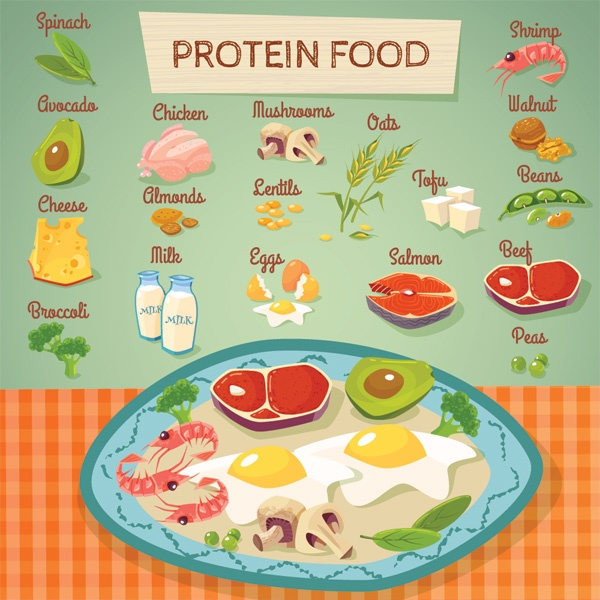 does eating protein help lose weight