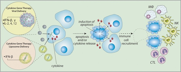What is the mechanism of action of oncolytic viruses treating cancer