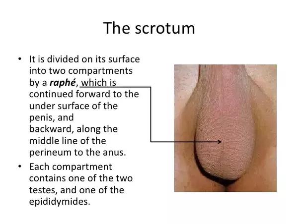 Man sperm balls