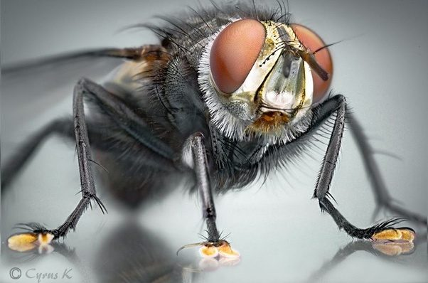 can a fly stay on a wall if it is dead quora