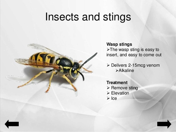 Which acid is present in sting venom of wasp? - Quora