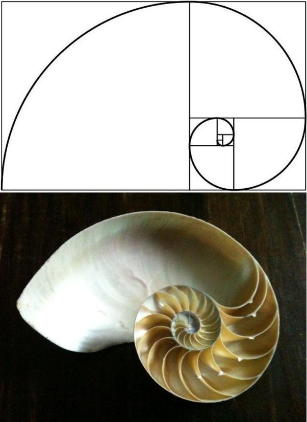 fibonacci series and the golden ratio engineering essay The fibonacci numbers and the golden section by zhengyi(eric) ge 4th year chemical engineering the bagdad city gate dome of st paul: london, england the great wall.