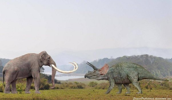 If a Tyrannosaurus and the largest Mammoth Species lived ...