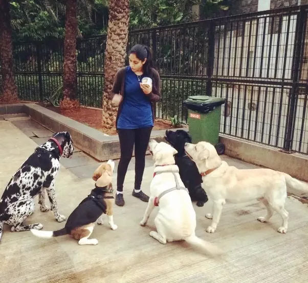 Doberman Dog Puppies For Sale In Delhi