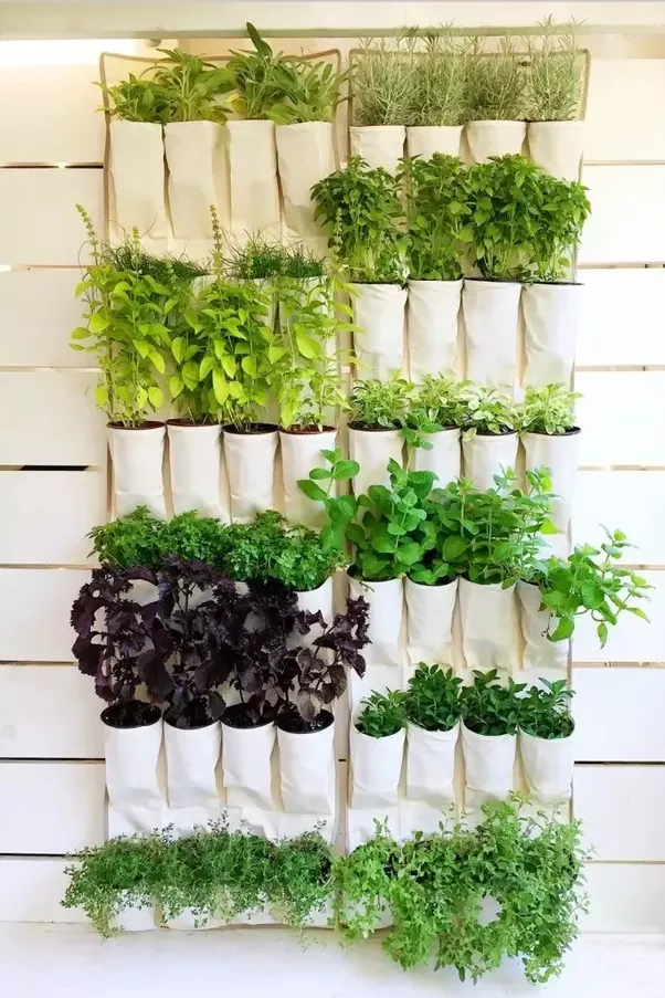 Different Landscapers Or Even Home Owners Use Different Plants, Materials  And Irrigation System. Below Are Some Vertical Gardens For Your Reference.