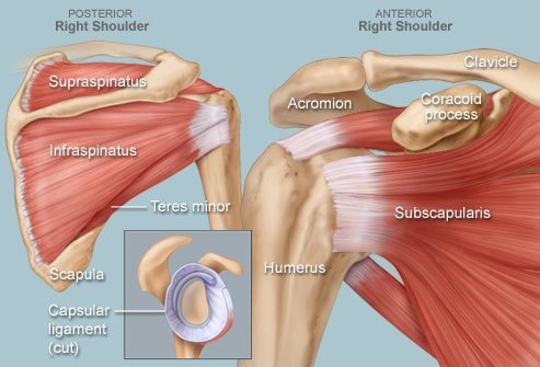 Physical Therapy: Why does my shoulder hurt when I play racket ...