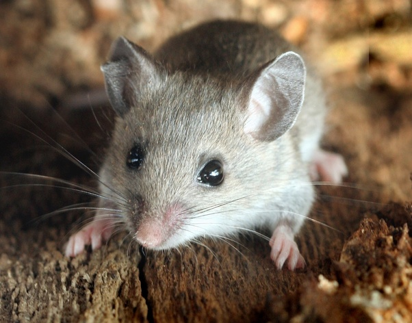 Do mice climb in your bed when you sleep? What are some