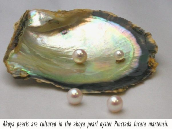 Giant Clam Pearl