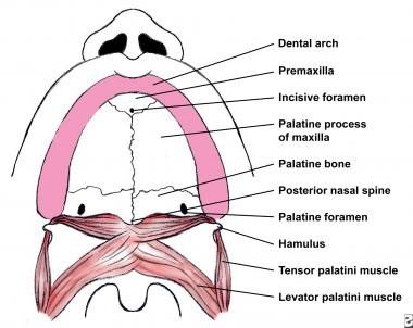 What are the small divots in the roof of my mouth? - Quora