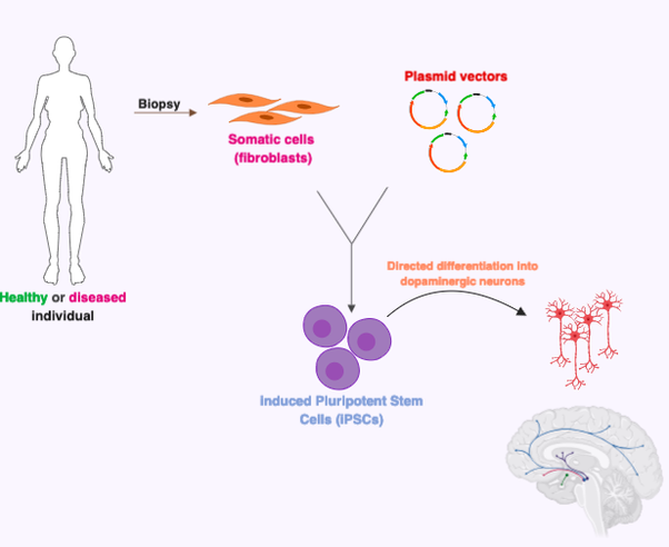 what diseases have stem cells cured