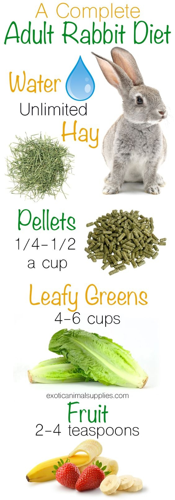 what foods can rabbits eat and not eat