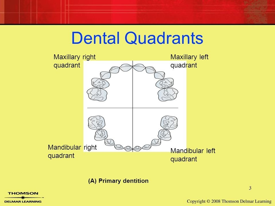 How To Differentiate Mandibular And Maxilla Tooth And How To