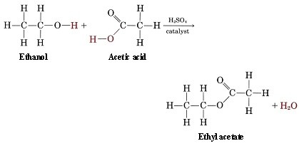 making ethyl ethanoate Synthesis of n-butyl acetate via esterification fromk l williamson,  ethanol acetic anhydride ethyl acetate acetic acid ch3ch2oh +.