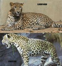 Nature Texture Animal Wildlife Wild Zoo Fur Pattern Jungle Cat Print Africa Mammal Black Fauna Leopard