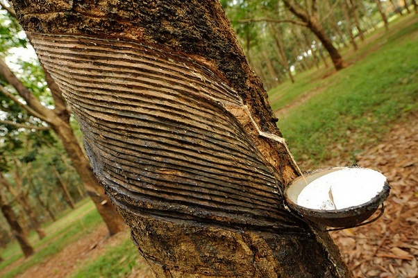 What Is Rubber Made Of >> What Are The Three Most Useful Things Made Of Natural Rubber