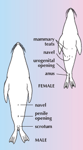 How do mermaids in myths have babies? - Quora