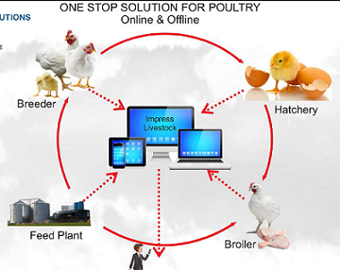 What is the best ERP software for poultry business? - Quora