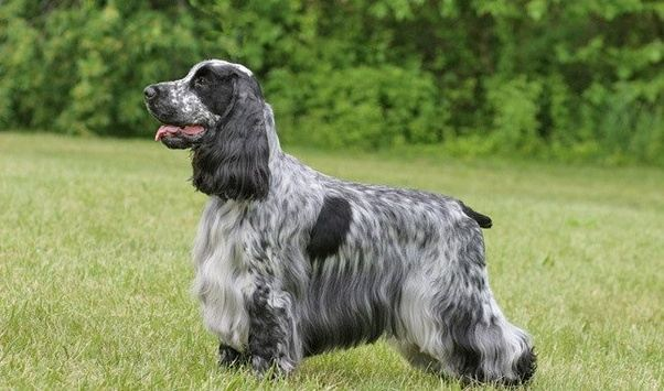 Dog Breeds For Sale In Hyderabad
