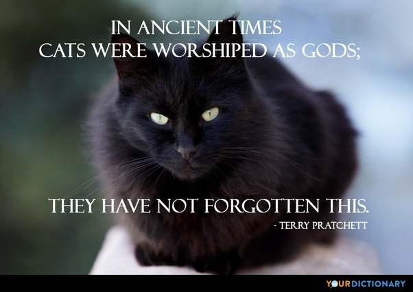 Image result for cat as god