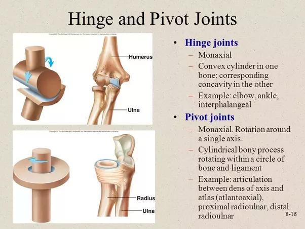 What Is The Difference Between A Hinge Joint And A Pivot Joint Quora