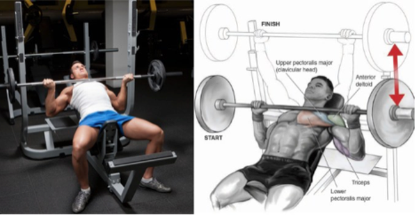What exercises will help increase bench press? - Quora