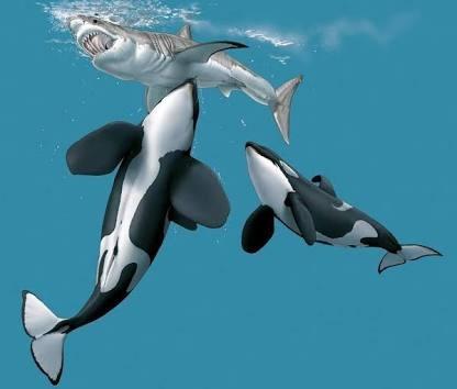 Can look sperm whale versus shark think