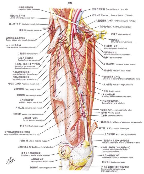 靭帯 鼠径 鼠径部痛症候群(股関節の痛み)の治療