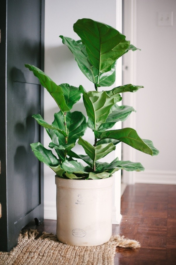 What plants are a good option for indoor small pots Quora