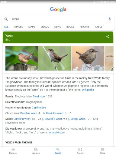 What is a four letter word for a small bird?   Quora
