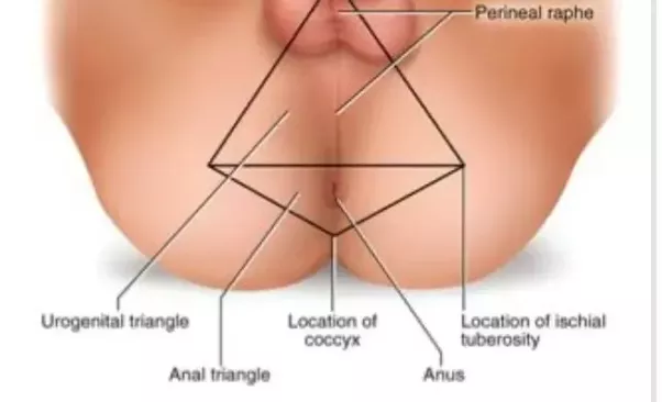 Area below the anus exciting Kelsie