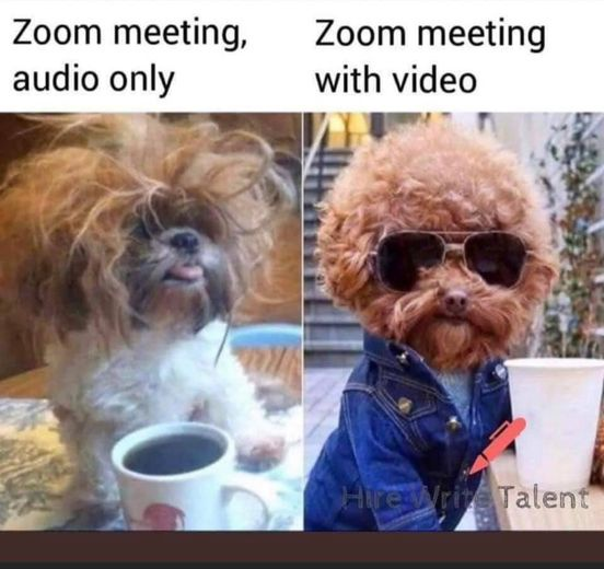Two small dogs, one seeming just from his bed with a cup of coffee for a zoom call with no video and the other well dressed and prepared to be on camera complete with his sunshades.