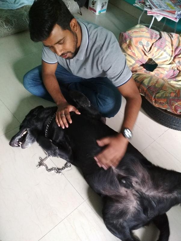 Price Of A Shih Tzu Puppy In India