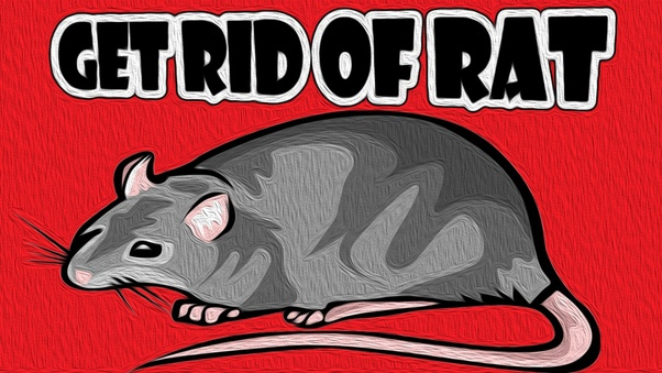 What Is The Most Effective Way To Get Rid Of Ratsmice Quora